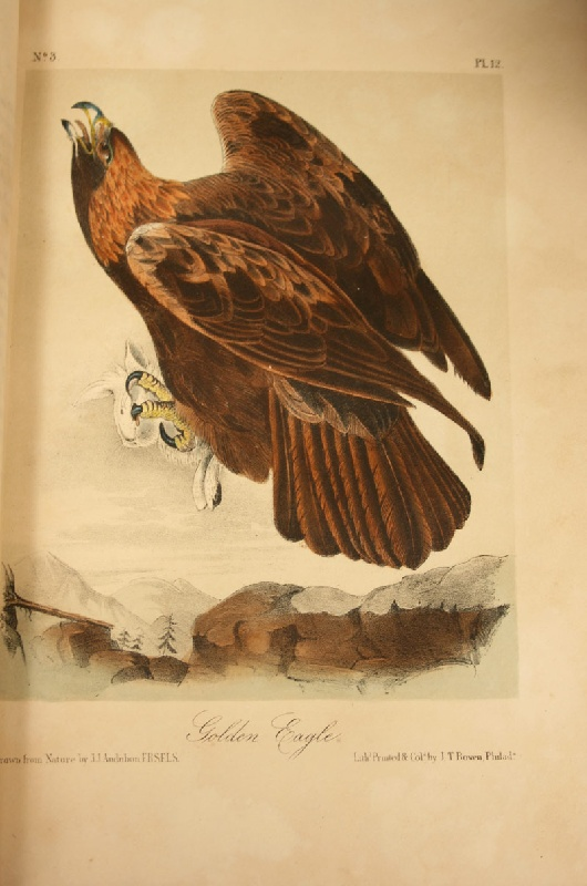 An exceptional complete set of John James Audubon Octavo Birds and Quadrupeds, 10 volumes