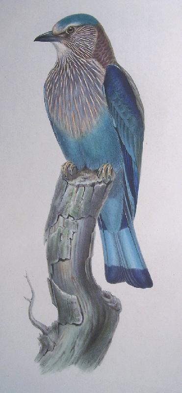 Gould and Richter bird print
