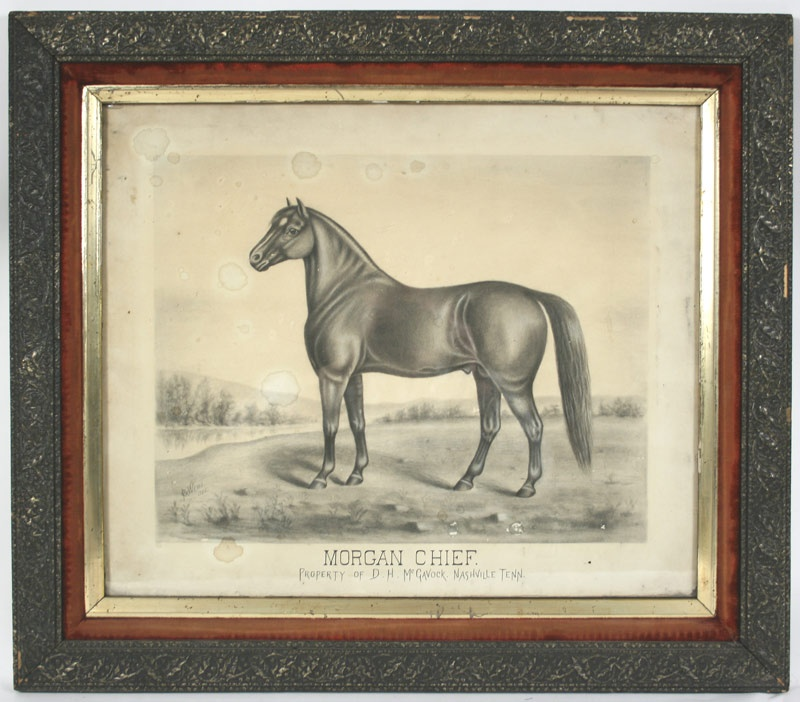 Morgan Chief, horse of D.H. McGavock, Nashville, TN